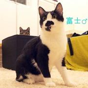 白黒 泥棒ヒゲ猫