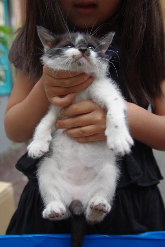 里親募集中白黒プチ猫